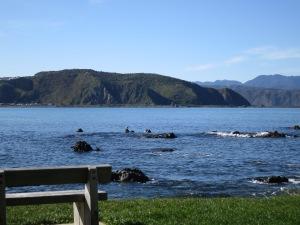 The scenic coast!